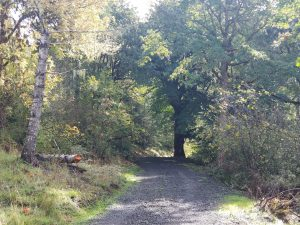 Improved legacy logging road on Crestmont Land Trust in Benton County Oregon